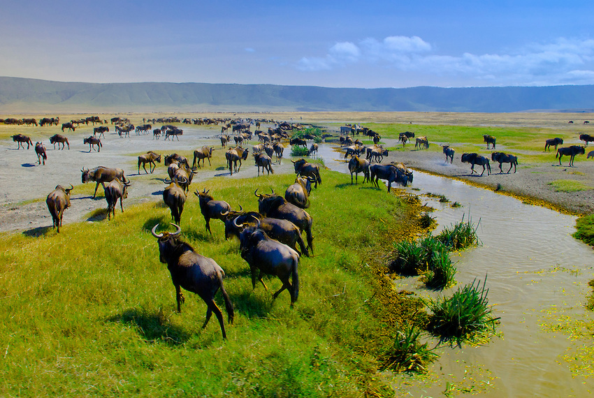 Ngorongoro Crater / Ngorongoro Conservation Area